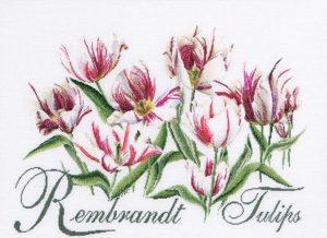 rembrandt_tulpen
