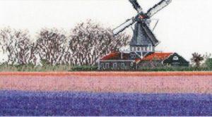 bollenveld_hyacint